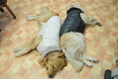 アンディとケニたん0902011 018