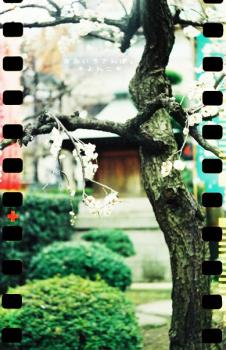 浅草の梅 + LUBITEL166+