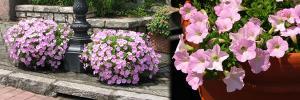 玄関のお花4