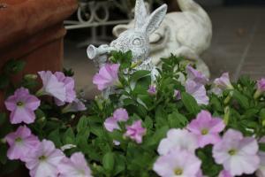 spring_2011_1.jpg