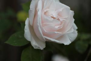 spring_2011_2.jpg