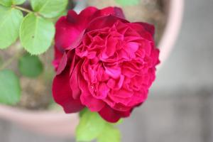 spring_2011_3.jpg