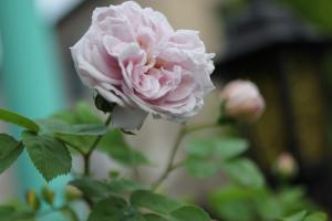 spring_2011_4.jpg
