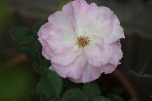 spring_2011_5.jpg