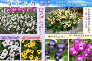 spring_2011_6.jpg