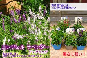 spring_2011_7.jpg