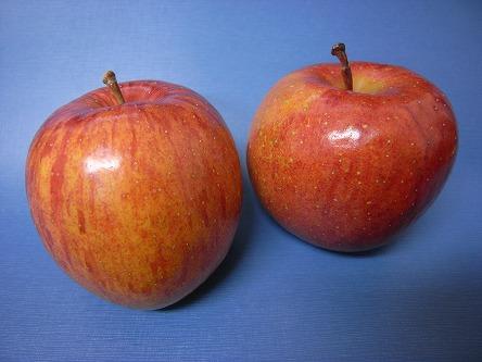 今年のリンゴ、フジ(蜜タップリ) 施工前(うん?)