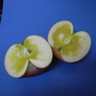 今年のリンゴ、フジ(蜜タップリ) 切断完了