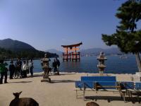 厳島神社@大鳥居1