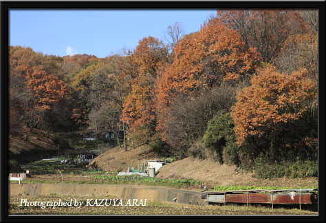 081206kurokawa2.jpg
