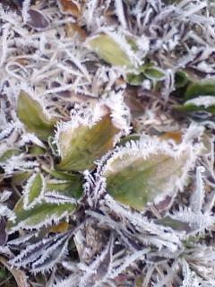 冬の朝、あぜの花