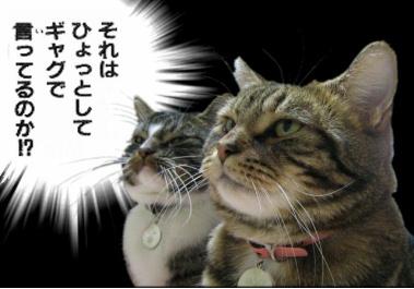 ひょっとしてギャグで猫編
