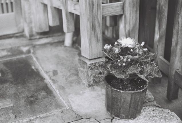京都 お花