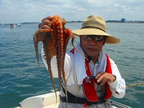 マゴチ、蛸釣り (27)