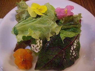 flower1_20101127222521.jpg