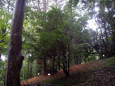 kuromoji_20101028231340.jpg