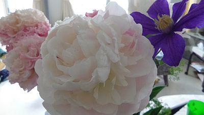 shakunage_20110628222859.jpg