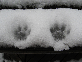 ラリの手形