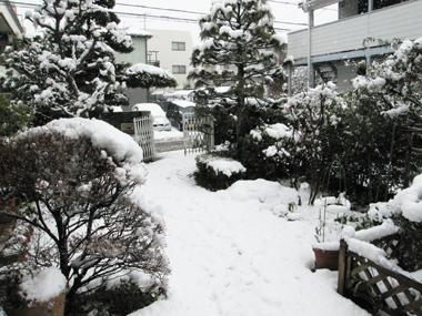 神奈川の雪