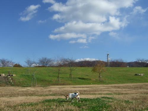 2008_1206深北緑地公園0033