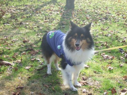 2008_1220'08年12月ビビリーズ散歩0028