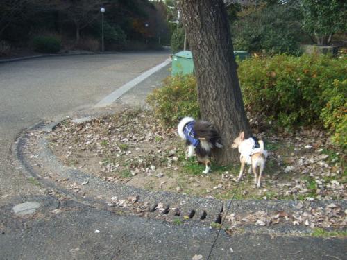 2008_1220'08年12月ビビリーズ散歩0044