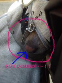 2009_02211月中旬~2月中旬頃0006-2