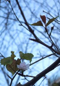 新芽と花びら