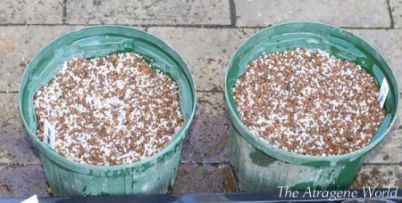 seedssowingofhelleborous1110201004.jpg