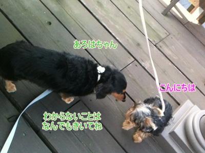 14_20111012212843.jpg
