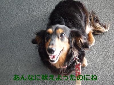 2010092006.jpg