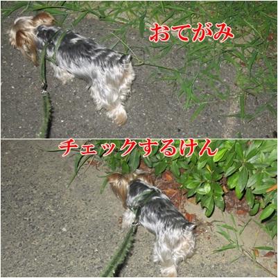 IMG_0011_20110731203739.jpg