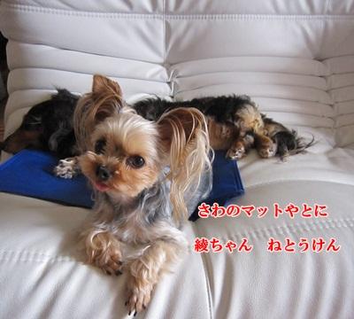 IMG_0308_20110704192407.jpg