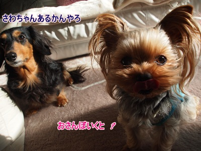 P1162046_20110116171425.jpg