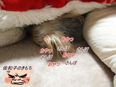 P1232293_20110124202533.jpg