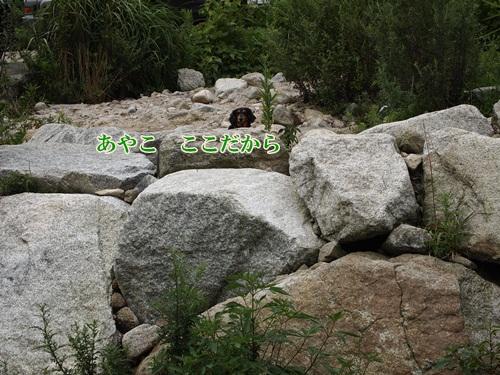 P7302433.jpg