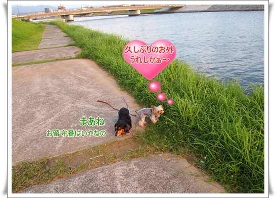 P9050297.jpg