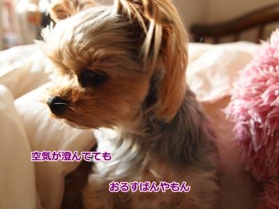PA053659_20101005203649.jpg