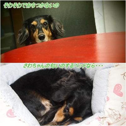 PA071466.jpg