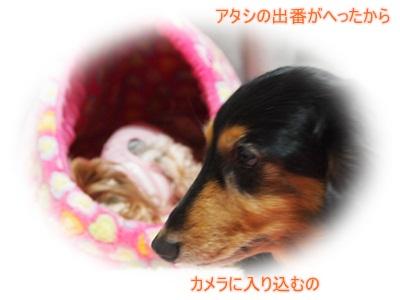 PC153320.jpg