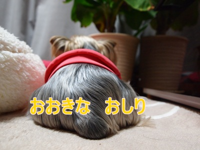 PC301469.jpg
