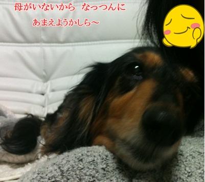 ___20110511213729.jpg