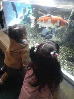 しながわ水族館①