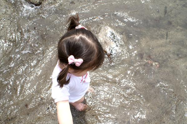 10-5-17-wakame-07.jpg