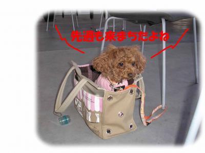 020803_convert_20090209000636.jpg