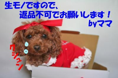 122908_convert_20081230022422.jpg