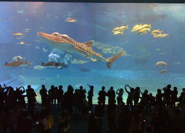 美らうみ水族館