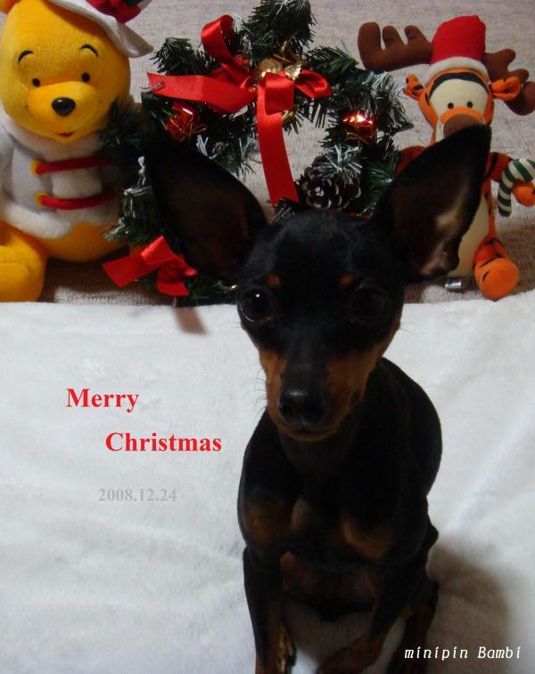 christmas20081224