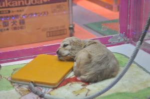 sleepdog.jpg