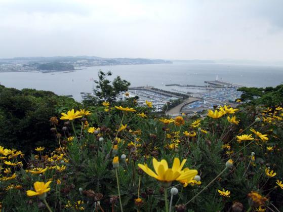サムエルコッキング苑内の花々と、江ノ島ヨットハーバーの遠景